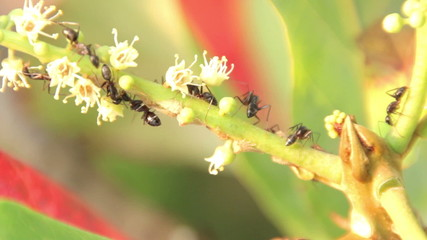 Large ants on a branch on a sunny day