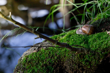 snail in the natural environment