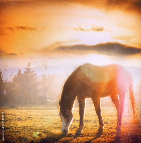 Horse grazing at sunset on autumn meadow