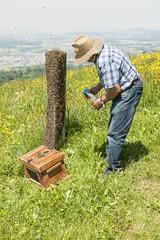 Einfangen eines Bienenschwarms
