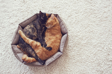 Cats sleeping and hugging