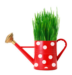 green grass in red polka dot watering can isolated on white
