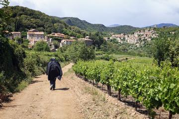 chemin entre les vignes