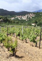 vignes et village