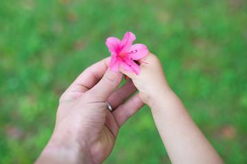 ツツジの花を持つ親子の手