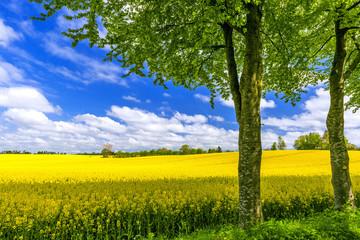 Krajobraz na wiosnę - 0320