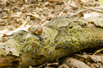 white-lipped snail and woodlice general ,