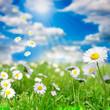 Gänseblümchenwiese und Himmel mit Wolken