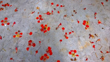 A beautiful flower in the  cement background