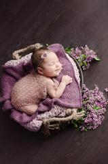 newborn girl and lilac