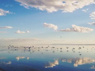 birds take flight over serene lake