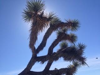 under the Joshua Tree