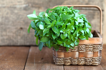 Bunch of fresh green basil in a basket on a wooden table, select