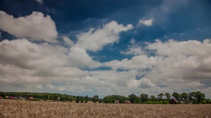 Grain field timelapse clouds against a blue sky