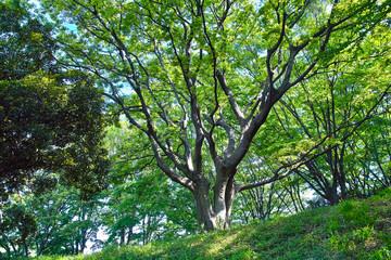 森の中の大きな木の枝