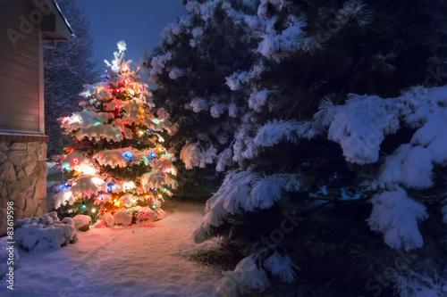 Keuken foto achterwand Bossen Heavy snow falls quietly on this magical Christmas Tree scene.