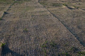landcaping erosion control single net traw blanket installed