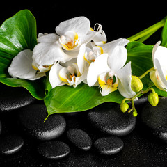 beautiful spa concept of blooming twig red orchid flower, phalae