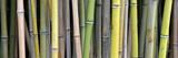 Fototapeta Sypialnia - bambus © photo 5000