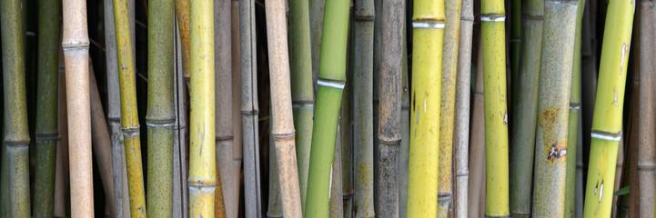 bambus © photo 5000