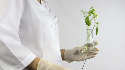 hand with sterile glove put pea in testing flask