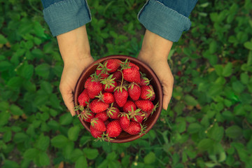 Hands holding fresh strawberries in a bowl
