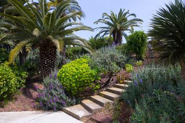 Botanical garden of Barcelona, Spain