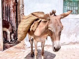 Lamu Island / Lamu Town - Donkeys