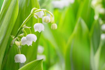 Hintergrund, Frühling, Maiglöckchen