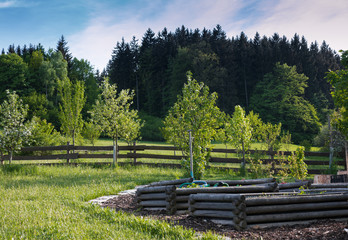 garden with organizes wooden beds and orchard