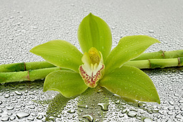 Mokra orchidea z bambusem