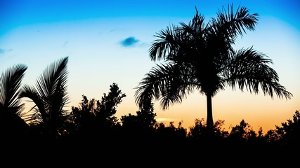 Palm tree silhouette on sunset
