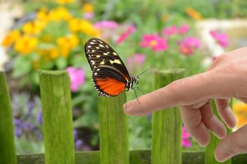 Schmetterling 150