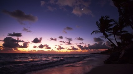 Palm trees on the tropical beach, video
