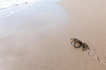 Granchio che cammina verso il mare