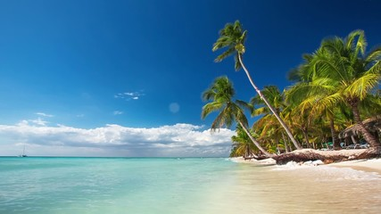 Palm trees on luxury exotic beach