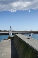 堤防の風景