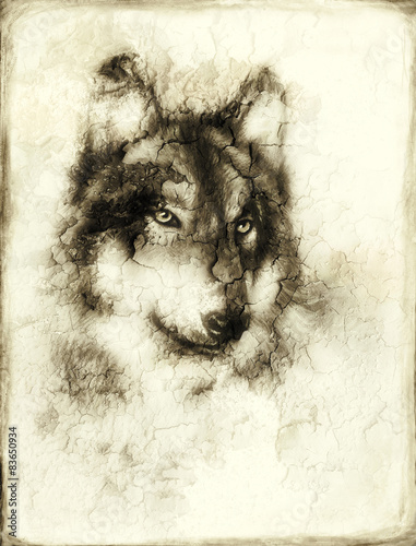 Illustration Portrait of a Wolf, crackle background. vintage