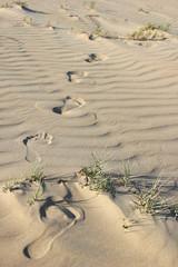 Footprints in a desert