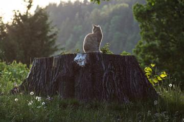 Katze auf Baumstamm