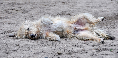 dog lying on the ground in a funny pose