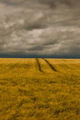 Sturm überm Kornfeld