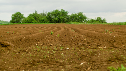 Ackerland Erde Feld ind HDR