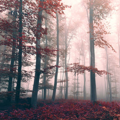 Beautiful red colored foggy dreamy forest © robsonphoto