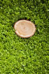stump tree on green grass
