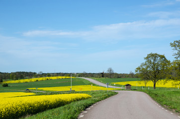 Landscape in green and yellow