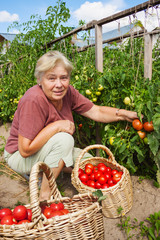 Woman reaps crop of tomatoes