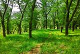 新緑の森の中の小道