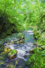 日本の渓流と新緑