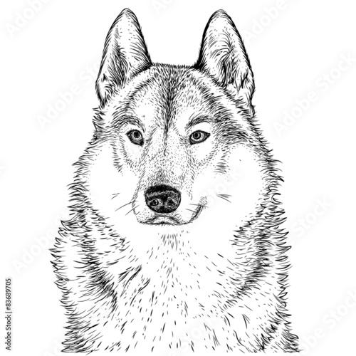 wolf beast dog - 83689705